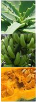 アロエエキス(キダチアロエ)、芭蕉(バナナ果皮)抽出エキス、西洋カボチャ乾燥種子抽出エキス