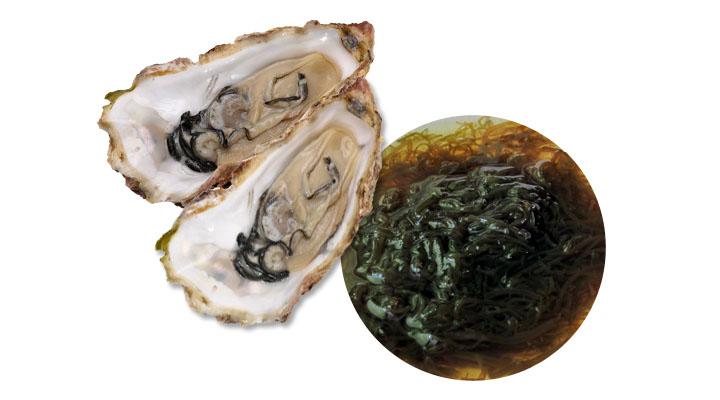 【牡蠣エキス】【フコイダン】
